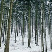 Blue Winter Forest Art Print