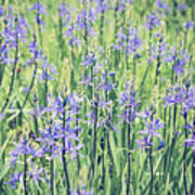 Bluebell Bluebells Flowers Blooming In Spring Art Print