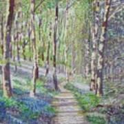 Bluebell Walk At Llanilar Aberystwyth Art Print