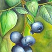 Blueberrries Print by Angela Armano