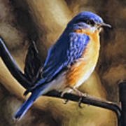 Bluebird Portrait Art Print
