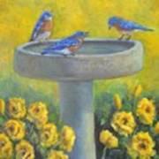 Bluebirds On Birdbath Art Print