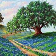 Bluebonnet Road Art Print