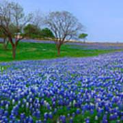 Bluebonnet Vista - Texas Bluebonnet Wildflowers Landscape Flowers  Art Print