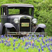 Bluebonnets And Fords Art Print