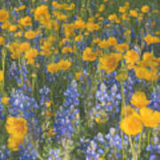 Bluebonnets And Wildflowers Art Print
