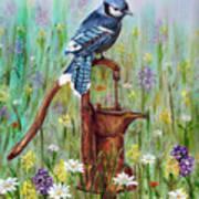 Bluejay Peaceful Perch Art Print