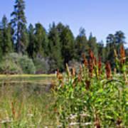 Bluff Lake Foliage 4 Art Print