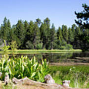 Bluff Lake Foliage 5 Art Print