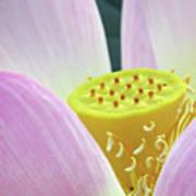 Blumen Des Wassers - Flowers Of The Water 06 Art Print