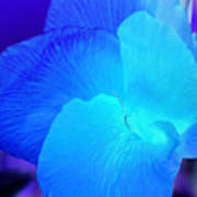 Blurple Flower Art Print