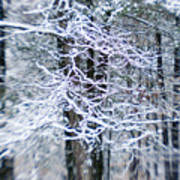 Blurred Shot Of Snow-covered Trees Art Print