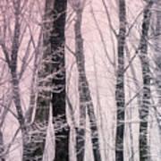 Blush Of Dawn Il Art Print