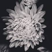 Bnw Flora Art Print