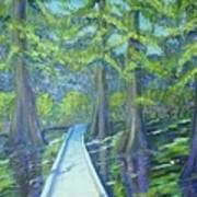 Boardwalk At Cypress Preserve Art Print