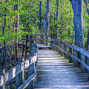 Boardwalk Going Into The Woods Art Print