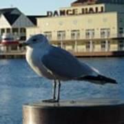 Boardwalk Seagull Art Print