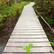 Boardwalk To Backguard Falls In British Columbia Art Print