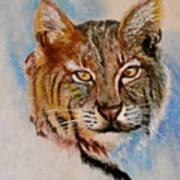 Bob Cat Art Print by Jean Ann Curry Hess