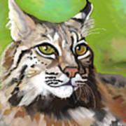 Bobcat Katta Art Print