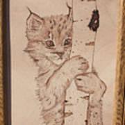 Bobcat Kitten Curiosity Art Print