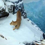 Bobcat On A Mountain Ledge Art Print