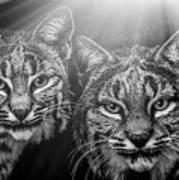 Bobcats Art Print