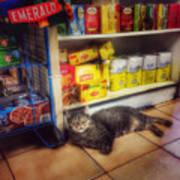 Bodega Cat - At Home In New York Art Print