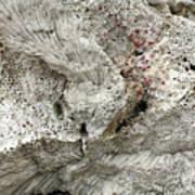 Bonaire Coral And Shells 1 Art Print