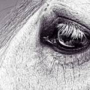 Bonbon's Eye Art Print