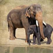 Bonding - Asian Elephants Houston Zoo Art Print
