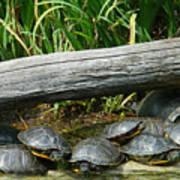 Bonding Box Turtles Art Print