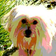 Bonnie In Color Art Print