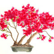 Bonsai Tree - Kurume Azalea Art Print