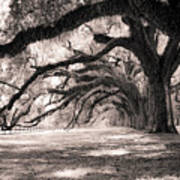 Boone Hall Plantation Live Oaks Art Print