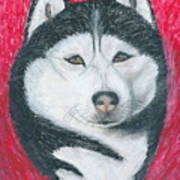 Boris The Siberian Husky Art Print
