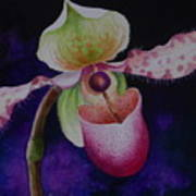 Borneo Orchid P Chiquita Art Print