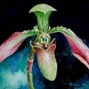 Borneo Slipper Orchid Art Print