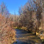 Bosque De Rio De Taos Art Print
