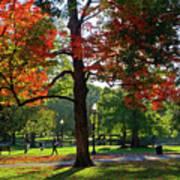 Boston Public Garden Autumn Tree Morning Light Walk In The Park Art Print