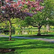 Boston Public Garden Pond Through The Cherry Blossom Spring Day Art Print