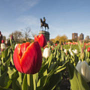 Boston Public Garden Tulips And George Washington Statue Art Print