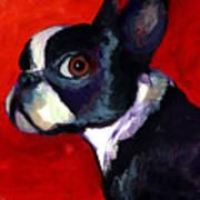 Boston Terrier Dog Portrait 2 Art Print by Svetlana Novikova