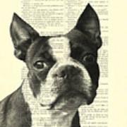 Boston Terrier Portrait In Black And White Art Print