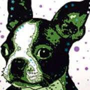 Boston Terrier Puppy Art Print by Dean Russo