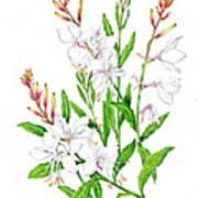 Botanical Illustration Floral Painting Art Print
