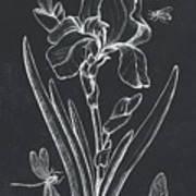 Botanique 1 Art Print
