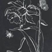 Botanique 2 Art Print