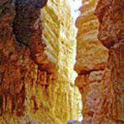 Bottom Of Wall Street On Navajo Trail In  Bryce Canyon National Park, Utah  Art Print