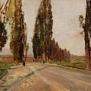Boulevard Of Poplars Near Plankenberg Art Print